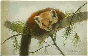 marten-pineweasel