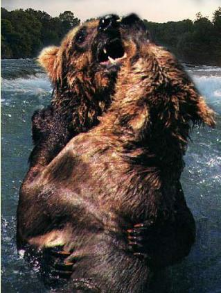 grizzlybearsfighting